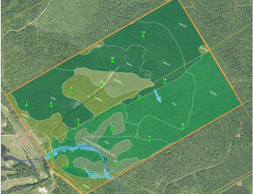 Caractérisation écologique de site avant développement